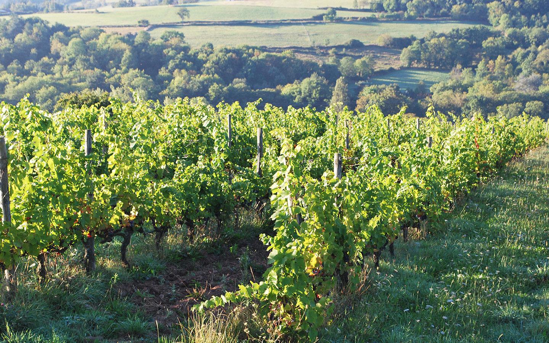Wijngaarden zijn er veel te vinden in de buurt van Chateau Les Bardons